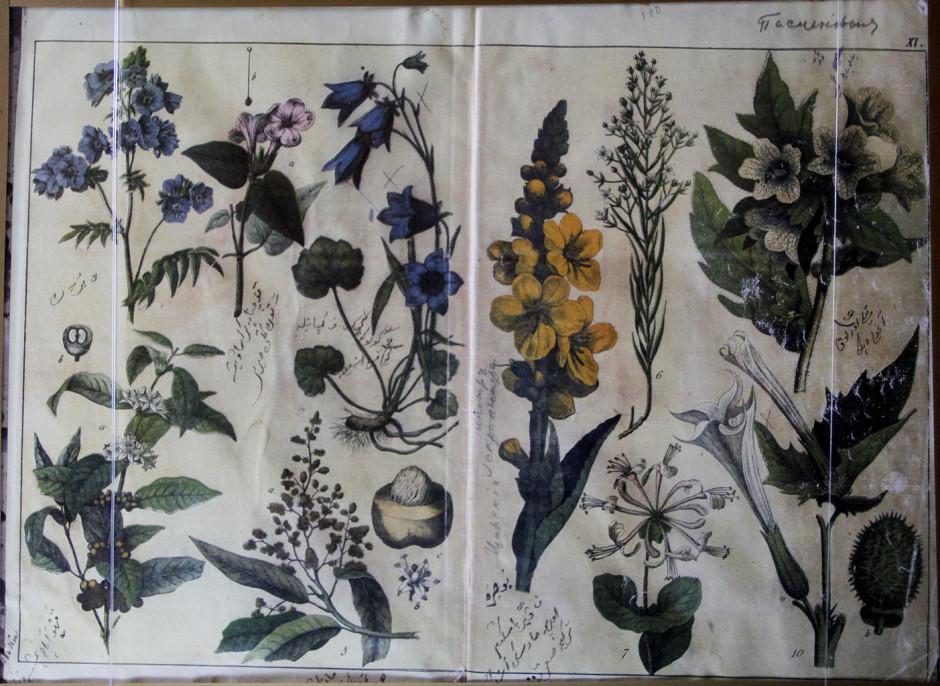 Страница из учебника по ботанике, составленного Каюмом Насыри