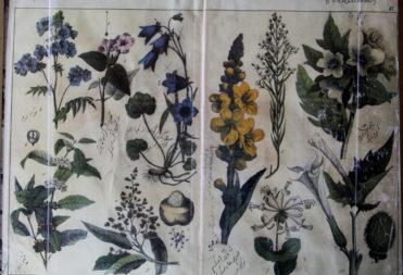 Страница из учебника по ботанике, составленного Каюмом Насыри. К. XIX в.